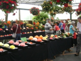 2015 Auckland Begonia Show.